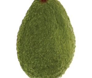 Ct avocado