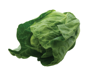 CT York Cabbage